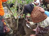 Isteri Mbah Marijan menanam pohon di lahan bekas dapur rumahnya yg dihancurkan Merapi